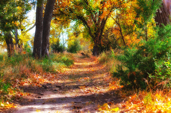 A trail to follow in the fall