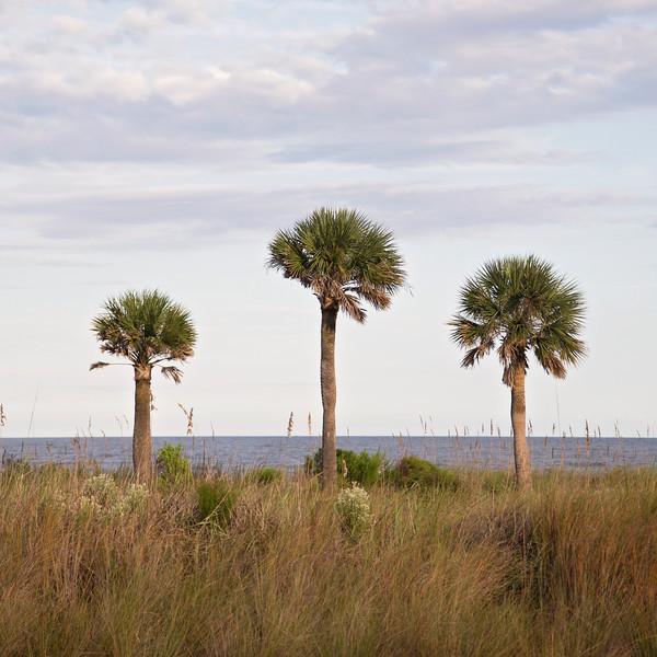 Three Palm Trees Square