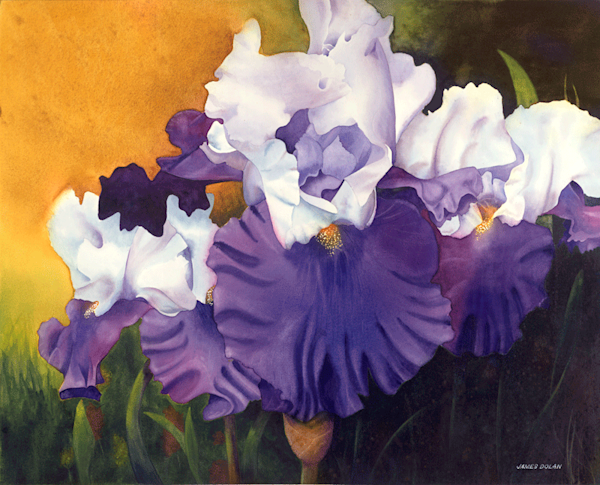 Purple Iris fine art print by Jim Dolan.
