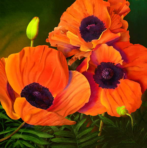 Poppies fine art print by Jim Dolan.
