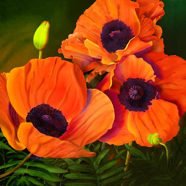 Poppies fine art print by Jim Dolan.