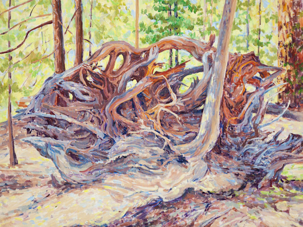 Root Maze on the Trail of 100 Giants