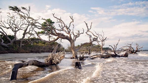 Driftwood Beach Crop