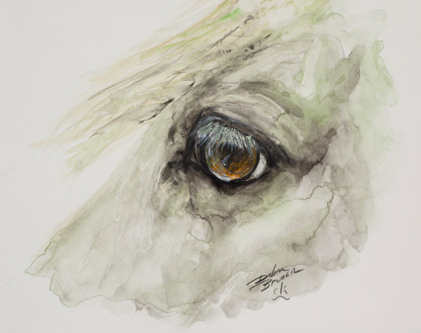Equine Eyes Watercolors