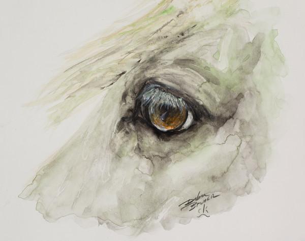 Equine Eyes Watercolors