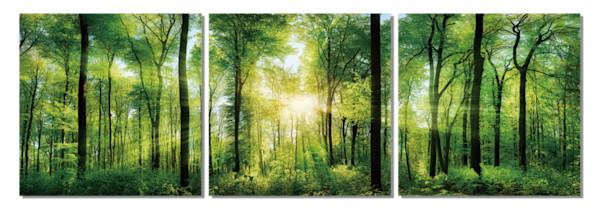 Botanical art, multi piece tree photography, 3 piece tree wall art