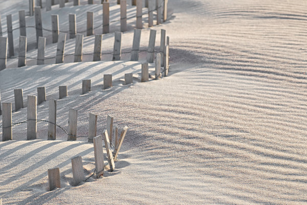 trellis fences in the sand, sand fences on Fire Island, Landscape photographs of beaches and oceans,