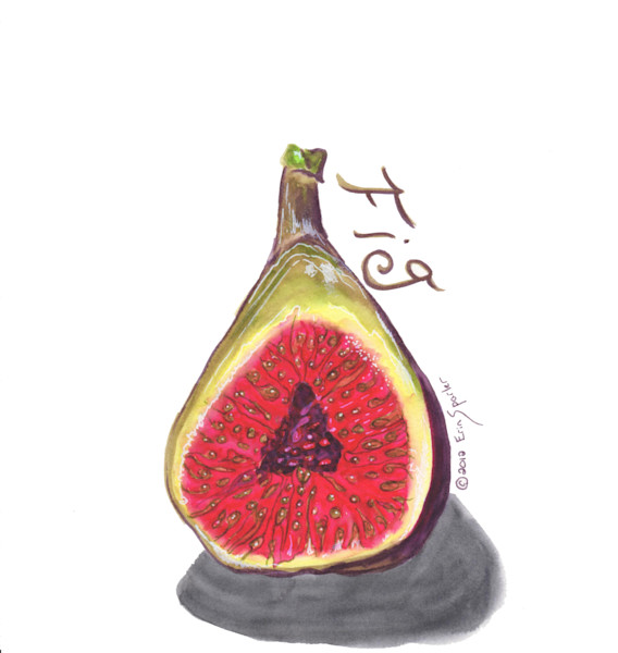 Watercolor painting or the seeds of a fig