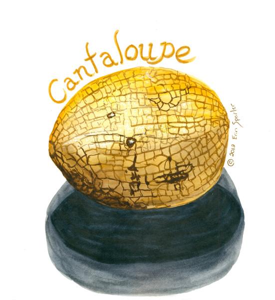 Orange yellow cantaloupe
