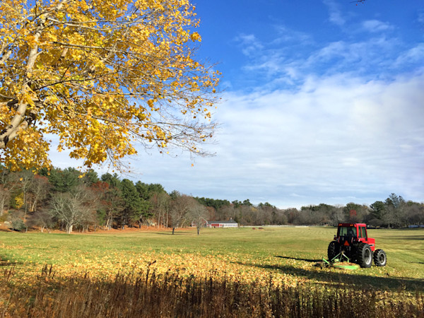 Blue Sky, Yellow Tree, Red Tractor,
