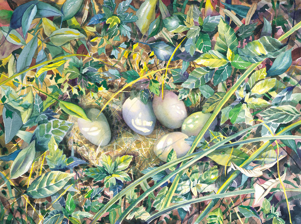 Judy's Duck Eggs