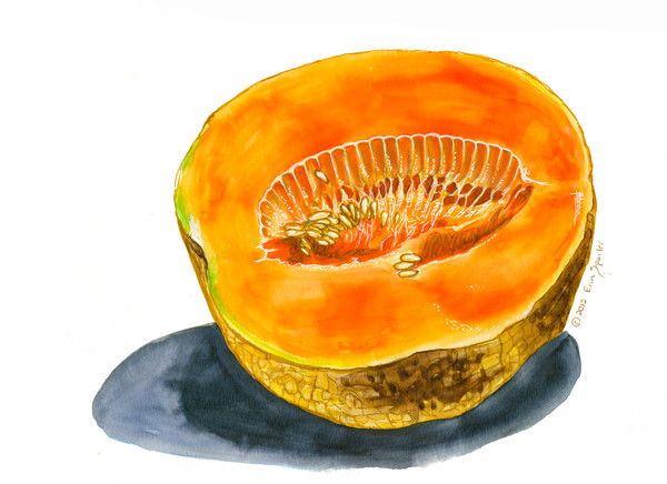 Bright Orange Cantaloupe
