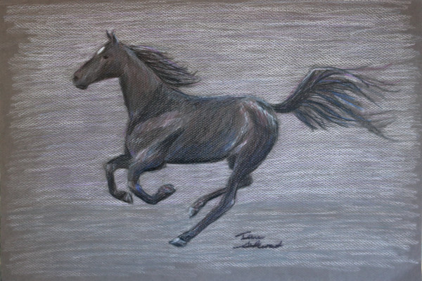 Black Horse, Colored Pencil Horse Drawing, Fine Art and Paintings for Sale by Teena Stewart of Serendipitini Studio