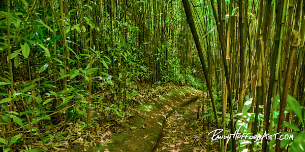 Brynne's Bamboo Pathway