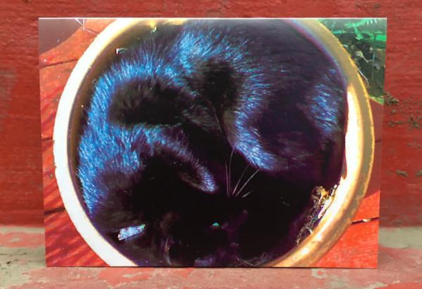 Sleeping Kitty In A Flower Pot