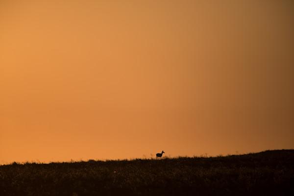 Antelope Sky