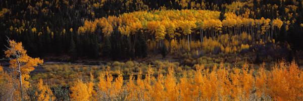 COL-T011 • Aspen Grove, Colorado