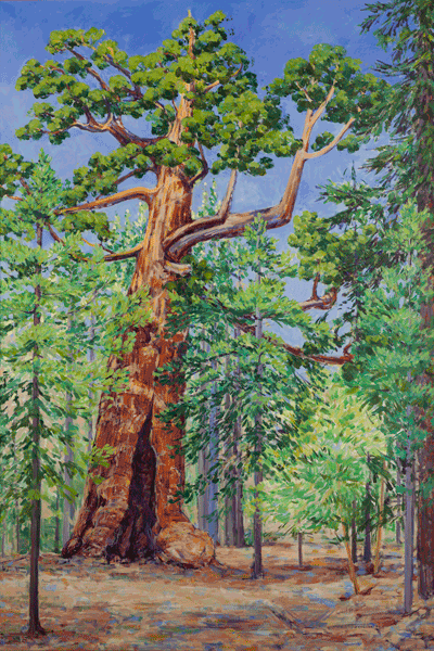 The Grizzly Giant Sequoia Tree 4' x 6' Original Acrylic Painting