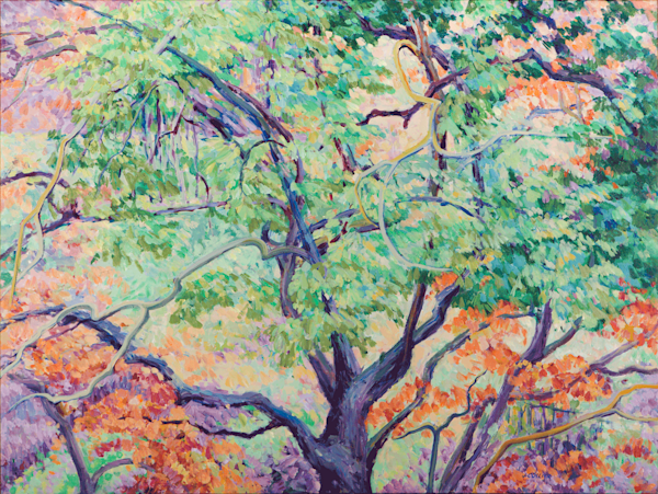 Spring Oak Lace Art | Joy Collier's California Landscape Art