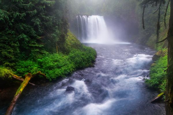 Mystery Shire - McKenzie River Oregon