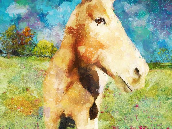"""Painted Pony"""