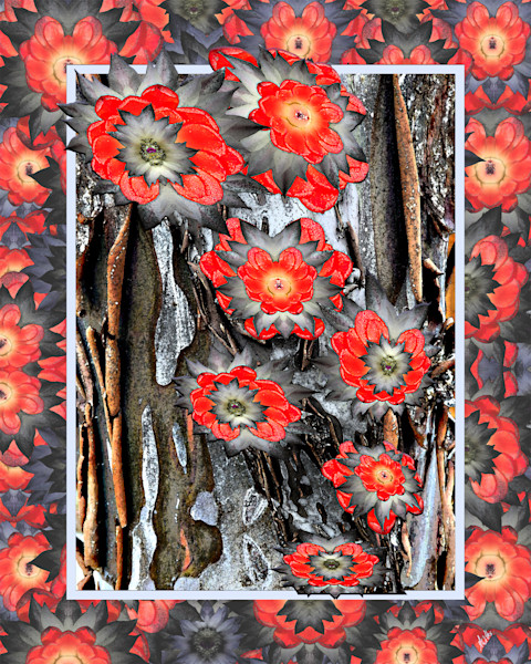SEO Wildflower digital art from photographs of flowers and plants for sale as prints by Maureen Wilks