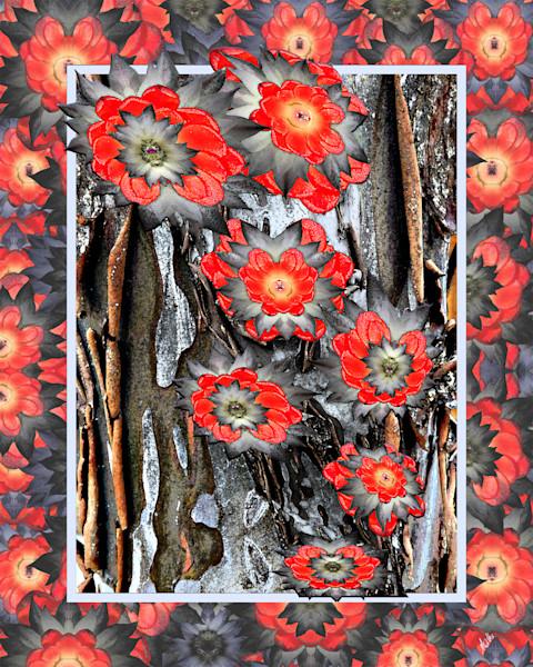Spring Cactus on Juniper Bark print of photographs transformed as digital art for sale by Maureen Wilks