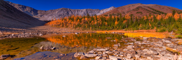 Fall colors on Pocaterra. Banff|Rocky Mountains|Canadian Rockies|