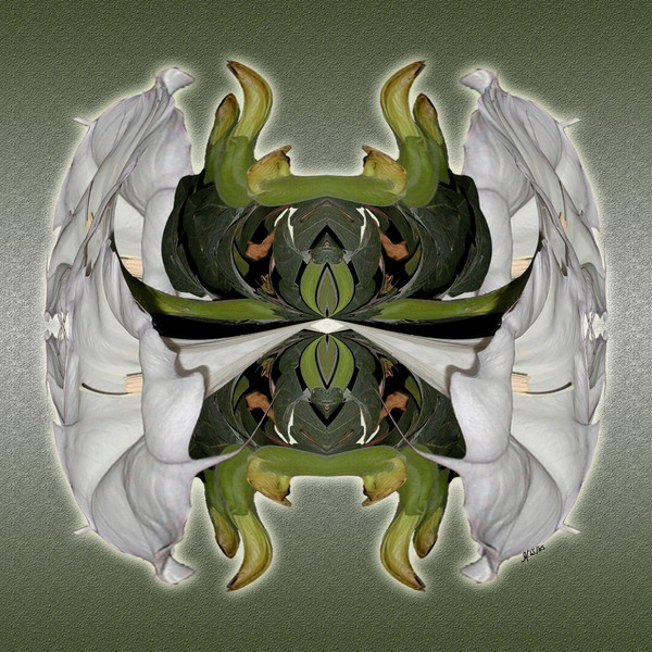 Sacred Troll print of photograph of Sacred Datura transformed into digital art for sale by Maureen Wilks
