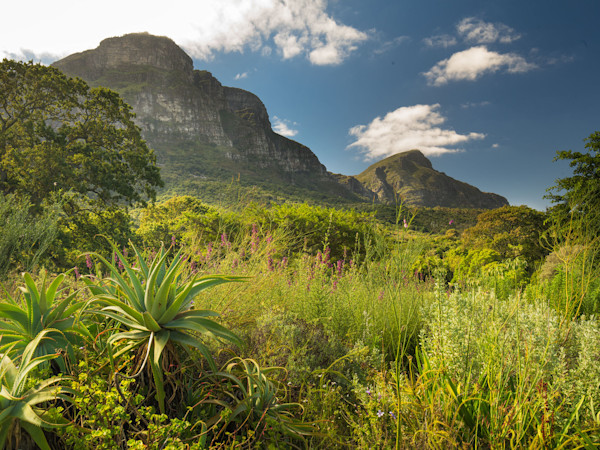 Kirstenbosch Botanical Gardens - Capetown South Africa