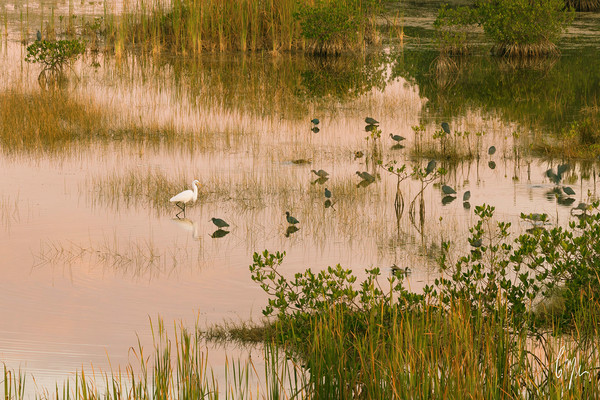 Constance Mier Photography - Bird Scapes