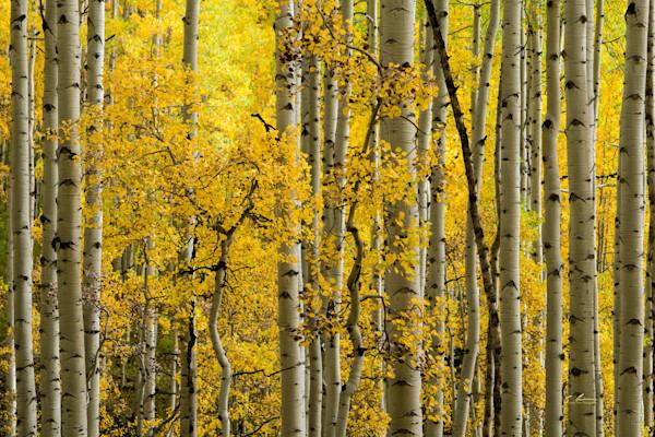 Sublime Fall