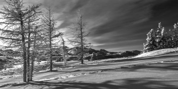 Snow covered trees in Banff National Park. |Canadian Rockies|Rocky Mountains|