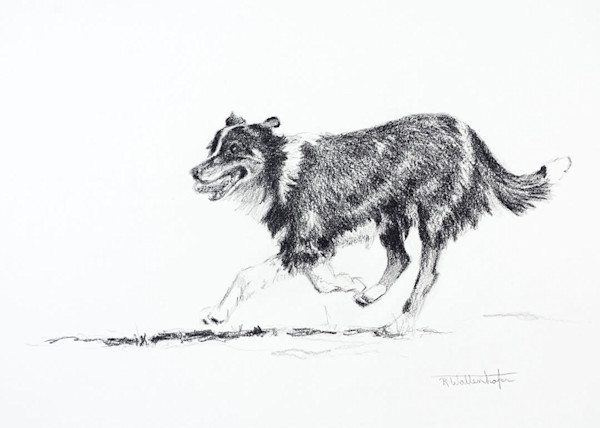 Fence Jumpers Pencil Dog Study
