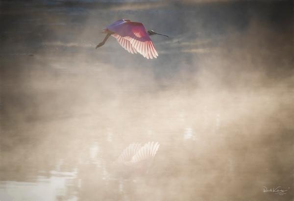 Pink Phantom of the Fog