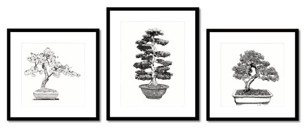 Art print group -Bonsai 1