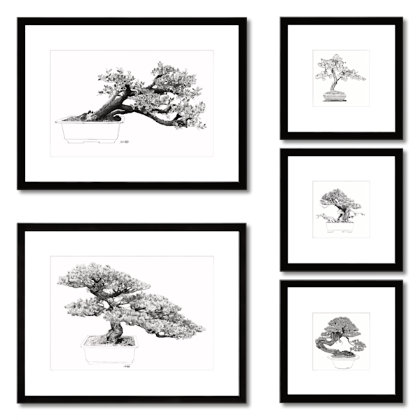 Bonsai prints in a group of 5 by Eric Wallis