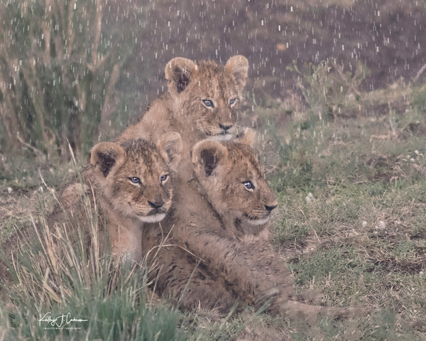 Rain on Three