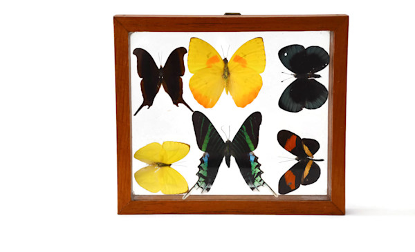 SOLD - Vintage Butterfly Collection