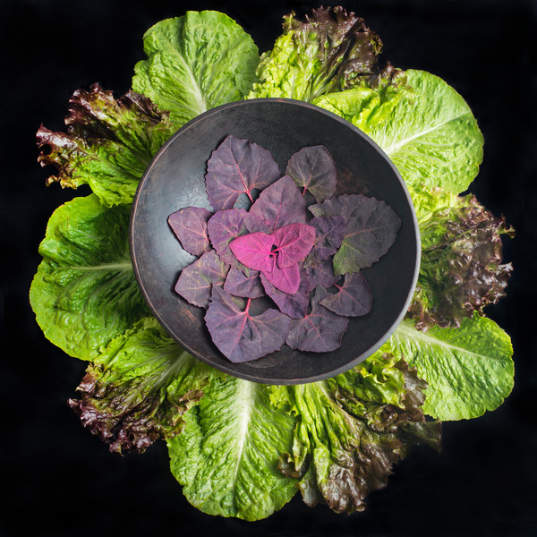 Red Orach (Mountain Spinach)and Lettuce Mandala