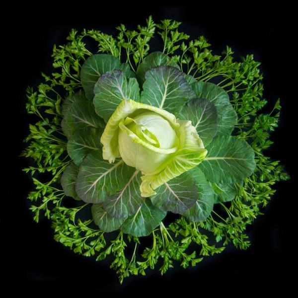 Cabbage, Collard Greens and Italian Parsley Mandala