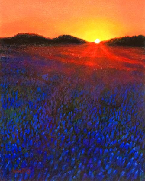 Bluebonnet Field Sunset