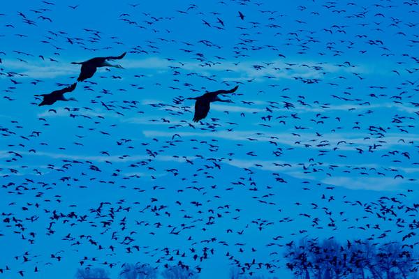 1,097 Cranes