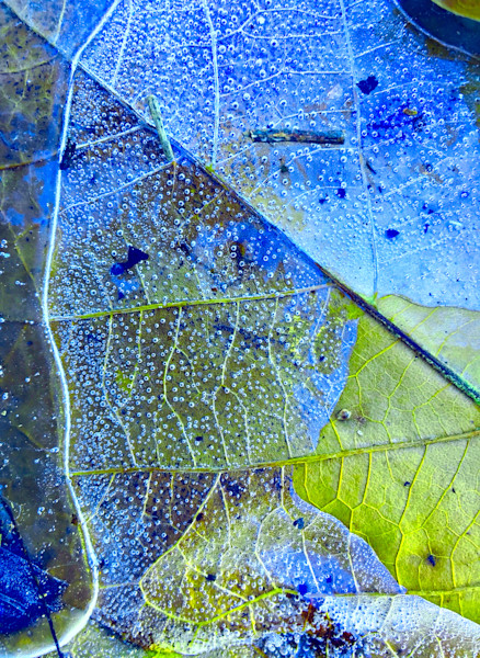 Ice Bubbles and Leaf Lines