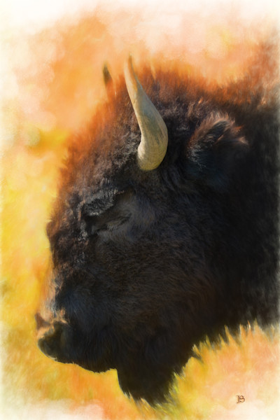 Bison Number Four Lone Heart