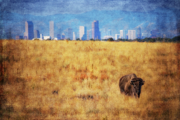Bison Number 6 Bison in City