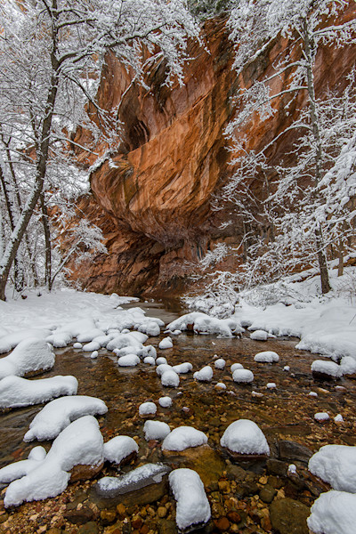 West Fork Snow on Trees and Rocks in the Stream