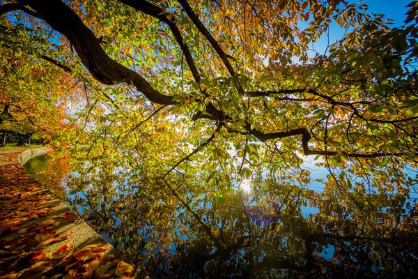 Fall at the Tidal Basin