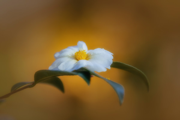 flowers--16