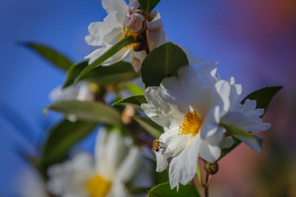 flowers-0814